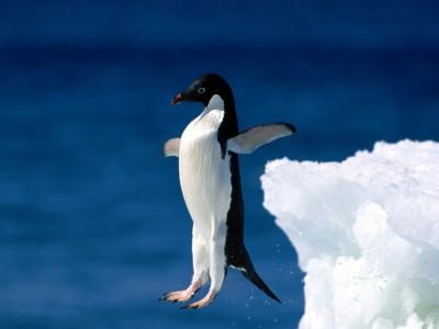 Leap_Of_Faith_Penguin-400x300