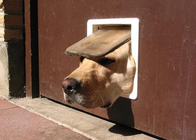 Dog_door