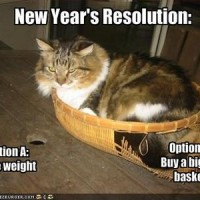 funny-pictures-cat-ponders-his-new-years-resolutions1