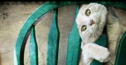 cat_stuck